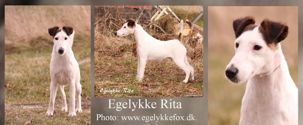 RITA fællesfoto til hjemmeside