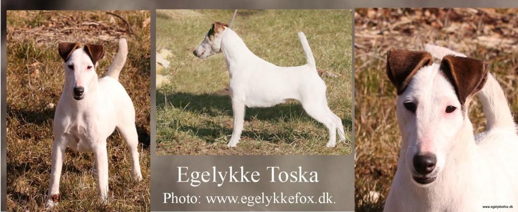 TOSKA fællesfoto rettet til hjemmeside
